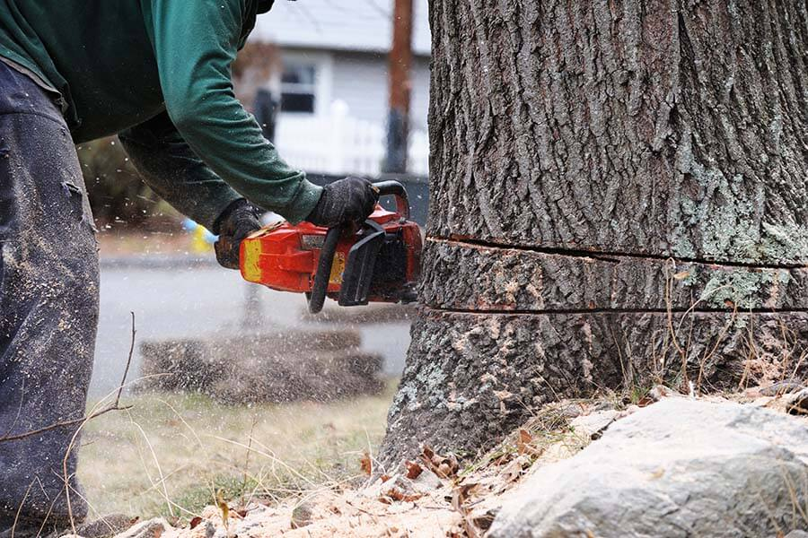 Tree Removal in Staten Island